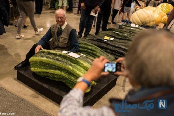 نمایشگاه میوه و سبزیجات