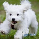 هزینه نجومی فوتبالیست معروف برای خرید سگ خانگی
