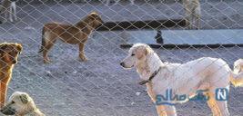 پرسه زدن سگ های ولگرد در پرند خبرساز شد!