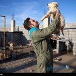 مرکز نگهداری سگ ها و پناهگاه حیوانات در کرمانشاه