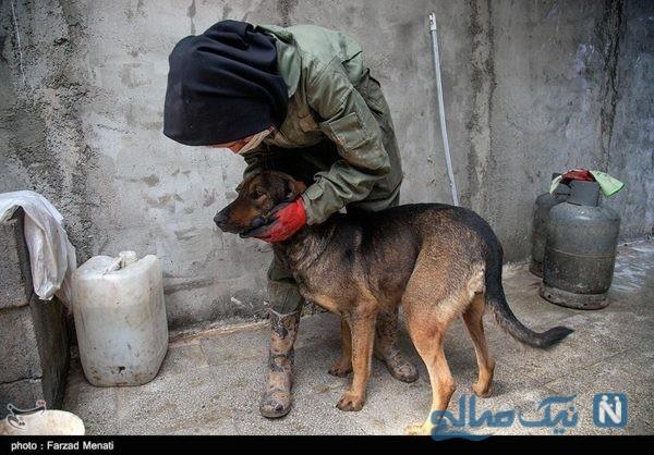 نگهداری سگهای خیابانی