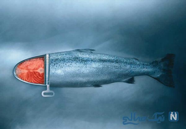 تبلیغ تن ماهی