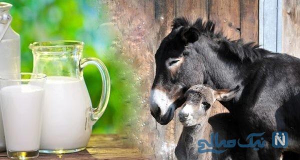 همه چیز درباره مصرف شیر الاغ | از سلامت تا کراهت