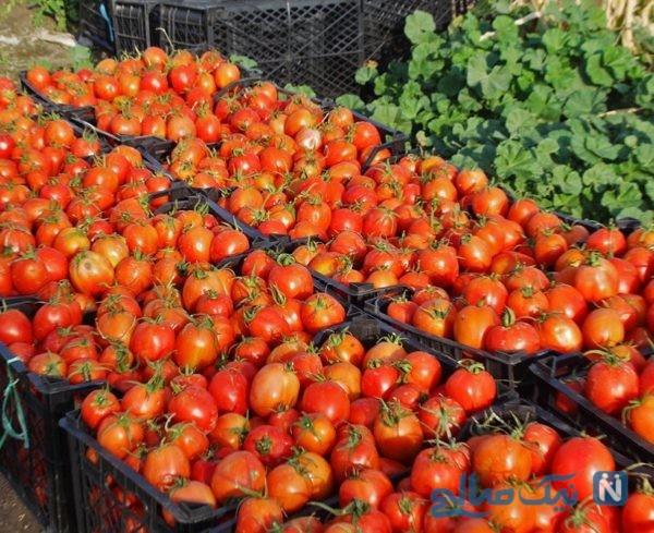 بالا رفتن قیمت گوجه