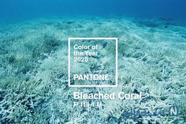 رنگ سال ۲۰۲۰ رنگی برای حمایت از مرجان هایی دریایی