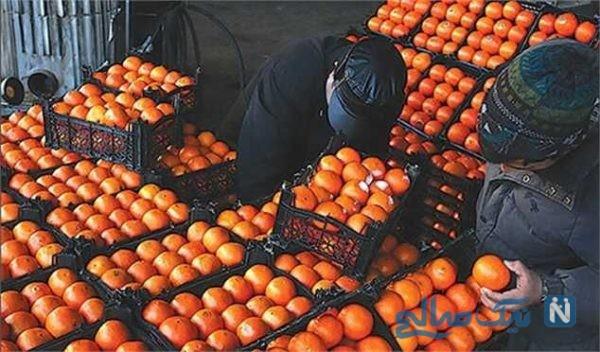 ۱۳ تن پرتقال رنگ شده با مواد غیر بهداشتی کشف شد