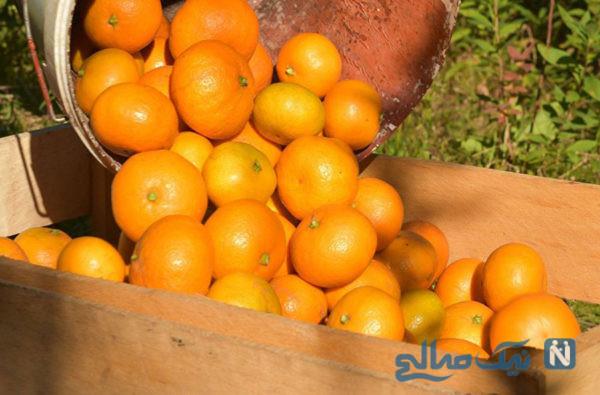نارنگی کرم دار