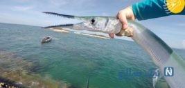بلای وحشتناکی که ماهی سرسوزنی به جان پسر انداخت +۱۶