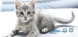 کار خیر یک هموطن برای گربه های شهر