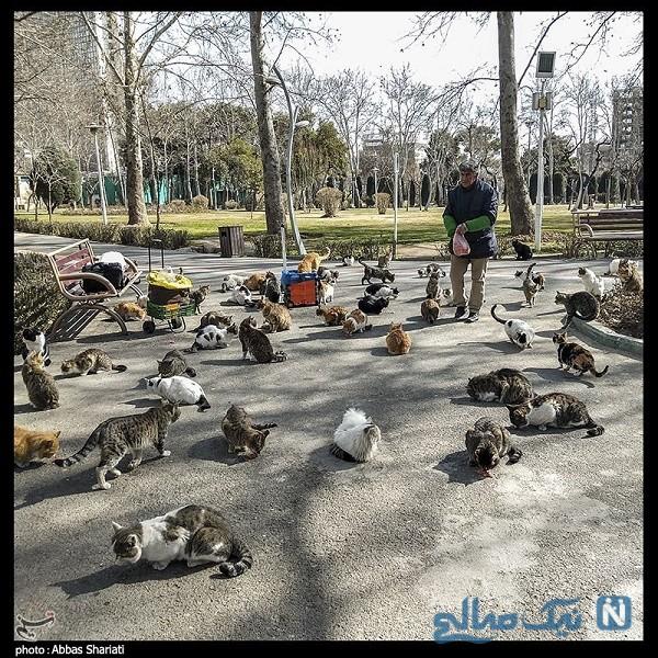 گربه های شهر