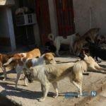 زن جوان بوکانی بدون ترس از سگ های ولگرد نگهداری می کند