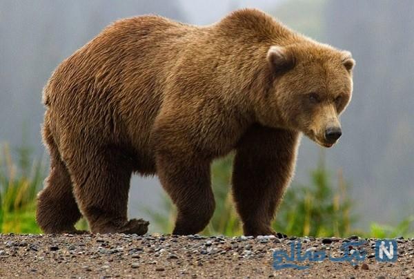 صحنه باورنکردنی که خرس در باغ وحش خلق کرد!