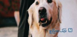 ازدواج اجباری دختر ۹ساله با یک سگ با ۱۰۰ مهمان
