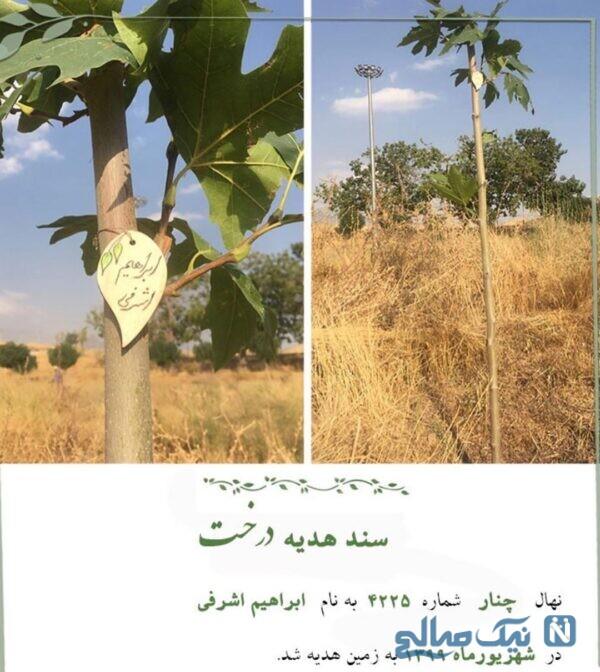 هدیه درخت به ابراهیم اشرفی