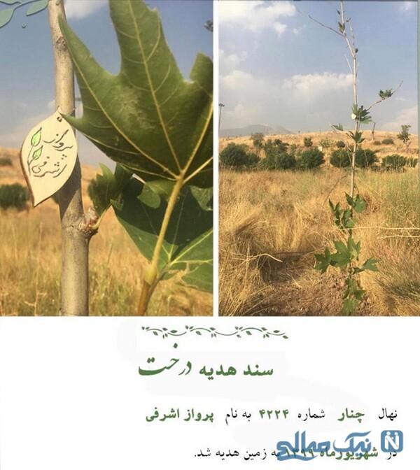 هدیه درخت