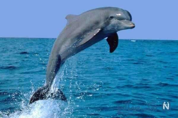 دلفین باهوش ترین حیوان در جهان
