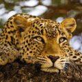 واکنش بسیار جالب حیوانات جنگلی وقتی که خودشان را در آینه می بینند