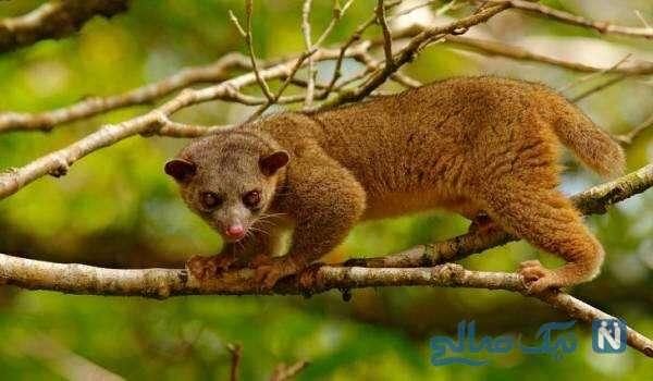 تصویری از حیوانات جنگلی