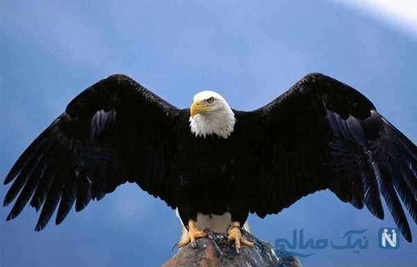 لحظه حمله وحشتناک عقاب به دختر بچه ۸ ساله , ببینید