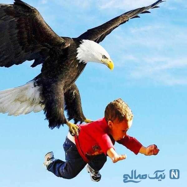 حمله وحشتناک عقاب به بچه