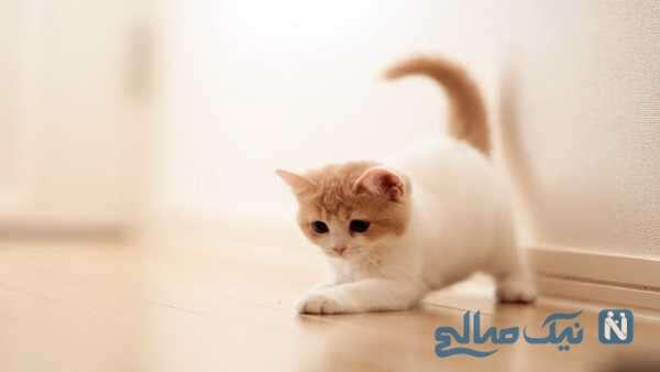 حرکات زیبای گربه بامزه