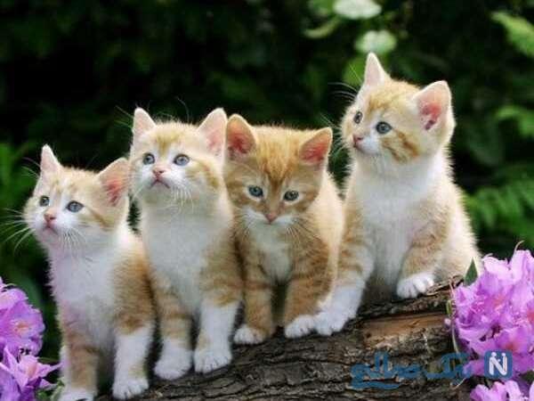 ویژگی گربه ها