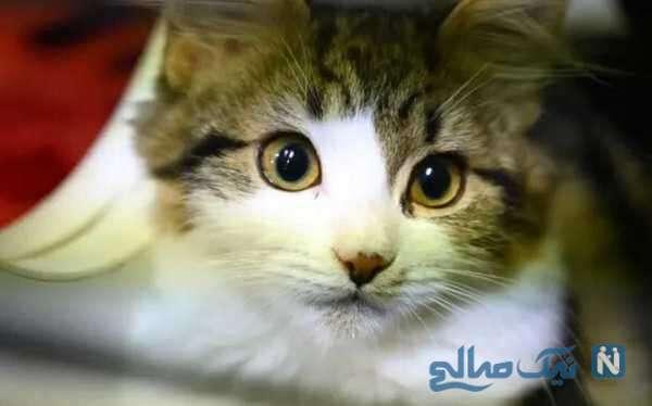 حرکات زیبای گربه ناز و بامزه سه بعدی غول پیکر روی بیلبورد