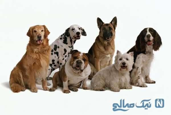 انواع سگ با نژاد مختلف