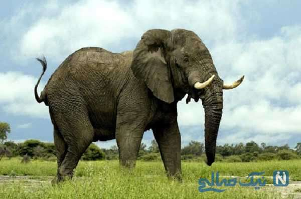 فیلم کوتاه و جالب از زایمان فیل