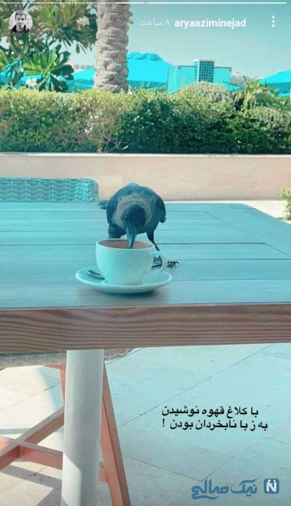 قهوه نوشیدن آریا عظیمی نژاد با یک کلاغ