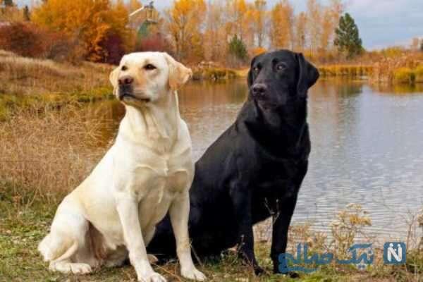 تاریخچه پیدایش سگ ها