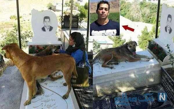 وفاداری سگ به صاحبش بعد از مرگ او
