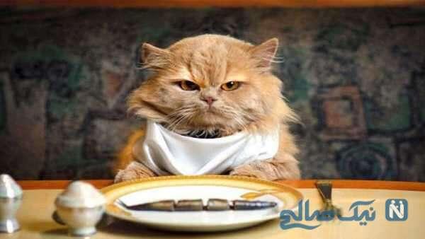 منوی غذای رستوران ها مخصوص حیوانات