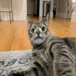 گربه ای که با یک اختلال کروموزومی از مرگ نجات یافت!