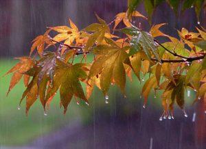 شعر ای نم نم باران از سعید بیابانکی را از دست ندهید!