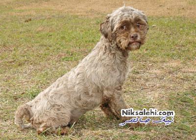 سگی با صورت انسانی بسیار عجیب