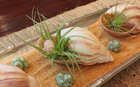 تزئین وسایل خانه با صدف های دریایی تصاویر