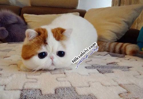 گربه بسیار بانمکی که طوفان به پا کرده است