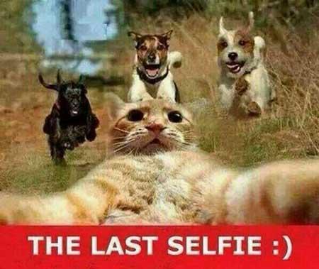 عکس های جالب از سوژه های خنده دار سری 72