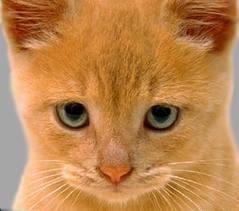 دو سال حبس، مجازات کشتن یک گربه