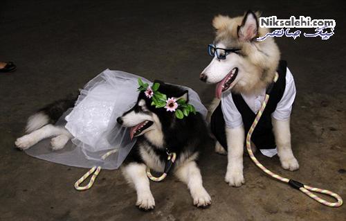 ازدواج دیدنی دو سگ در لباس عروسی