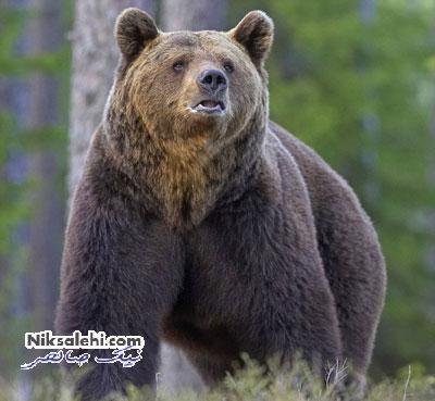 وحشت خرس با شنیدن صدای جاستین بیبر