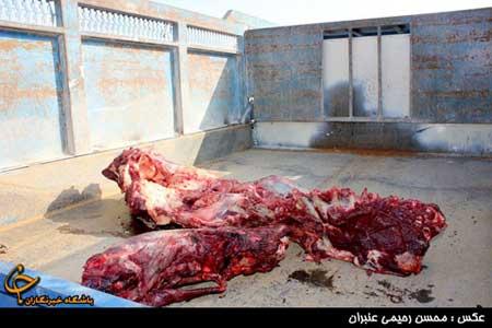 دستگیری فروشندگان گوشت الاغ