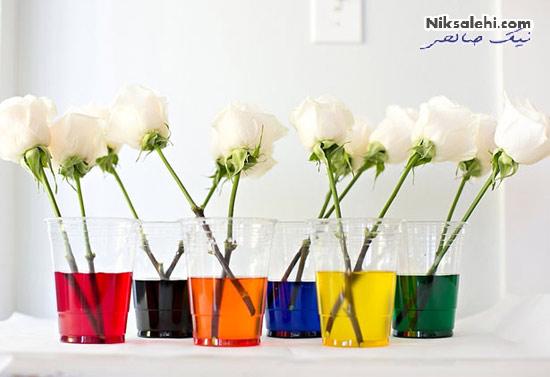روش تبدیل گل های رز سفید به گل های رنگی