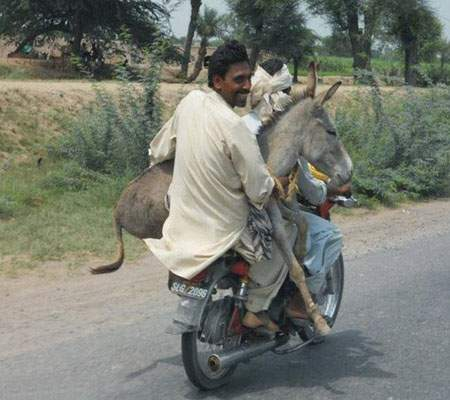 عکس های جالب از سوژه های خنده دار سری 75