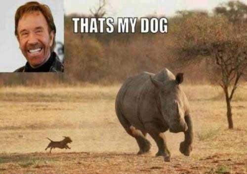 عکس های جالب از سوژه های خنده دار سری 54