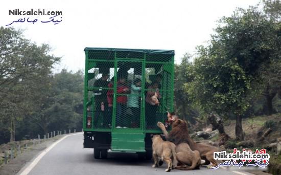 ایده بسیار خارق العاده یک باغ وحش برای بازدیدکننده ها