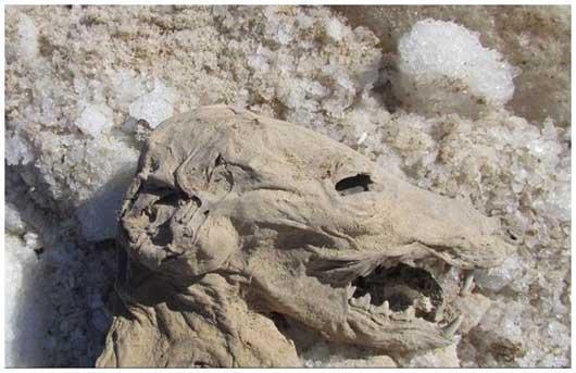کشف یک جسد عجیب در معادن نمک زنجان