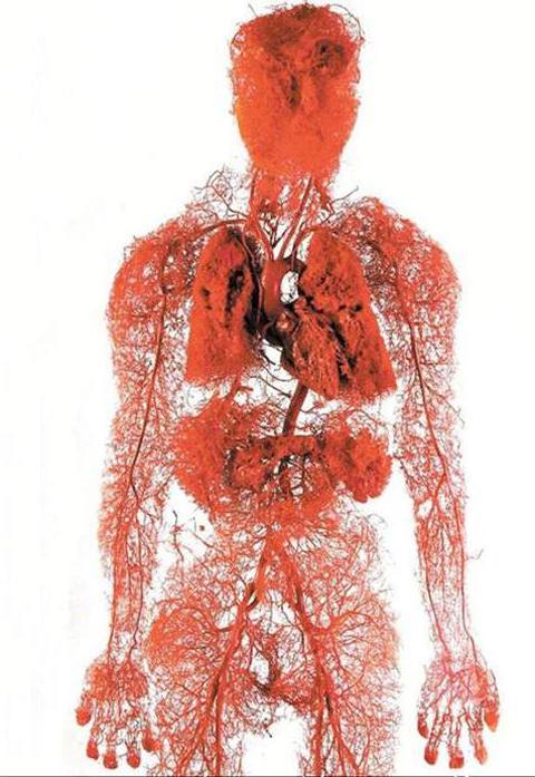 تصاویر شگفت انگیز از بافت ها و سلول های بدن انسان