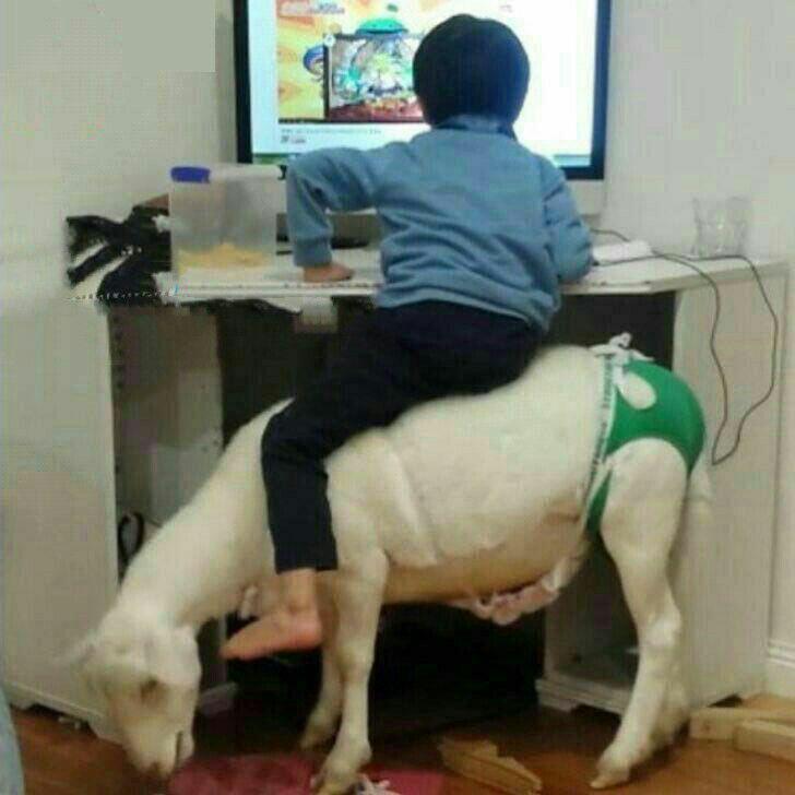 عکس های جالب از سوژه های خنده دار سری 187